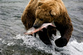 Wildlife of Alaska