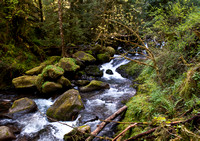Images Captured Along The Multinomah/Wahkeena Falls Trail